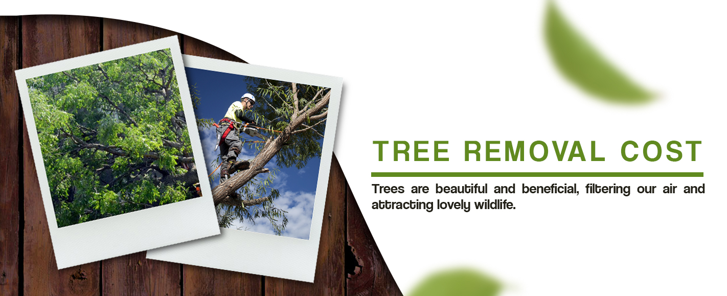 Cost Of Tree Removal Tree Removal Costs Whats The Cost