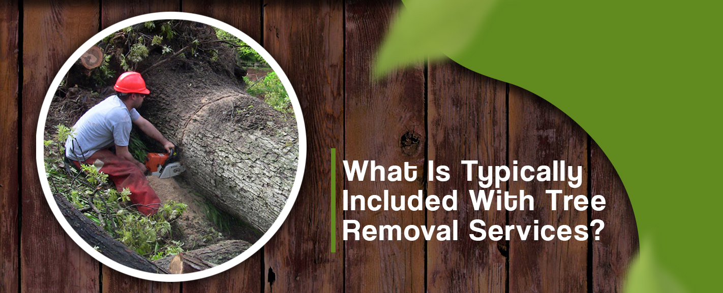 Tree Removal Cost How Much To Remove A Tree Removal Cost