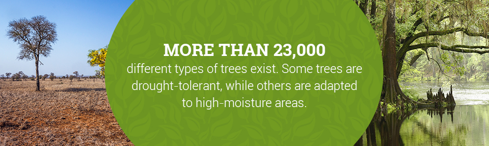 More Than 23,000 Types of Trees